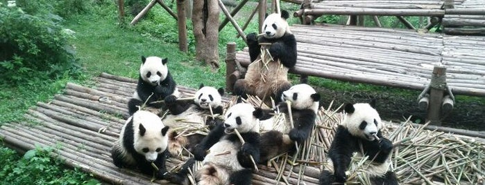 Chengdu Research Base of Giant Panda Breeding is one of 2016-12 HKG.