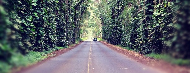 Tunnel Of Trees is one of Hawaii.