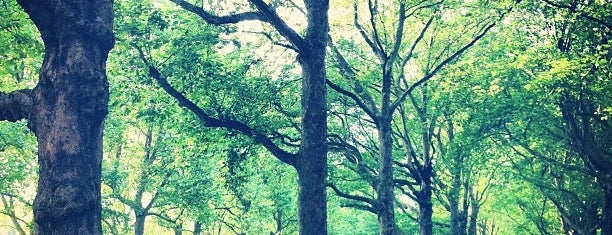 Green Park is one of London // Outdoors.