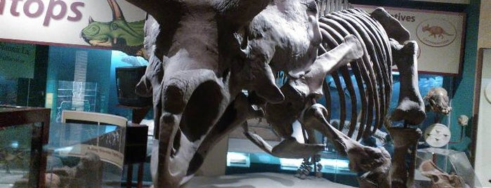 Dinosaurs/Hall of Paleobiology Exhibit is one of Washington by Isa.