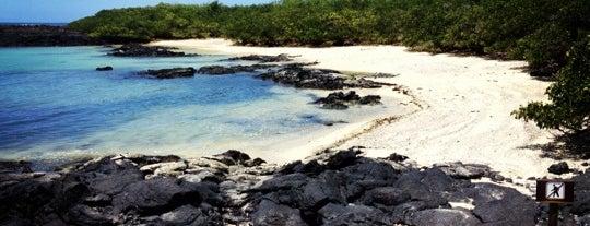 Archipiélago de Galápagos is one of Things To Do In Ecuador.