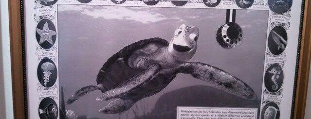 Turtle Talk is one of Disney.