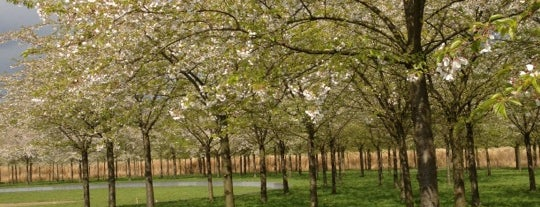 Kersenbloesempark is one of Must-visit Great Outdoors in Amsterdam.