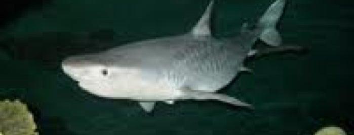 Shark Reef Aquarium is one of For Las Vegas in June.