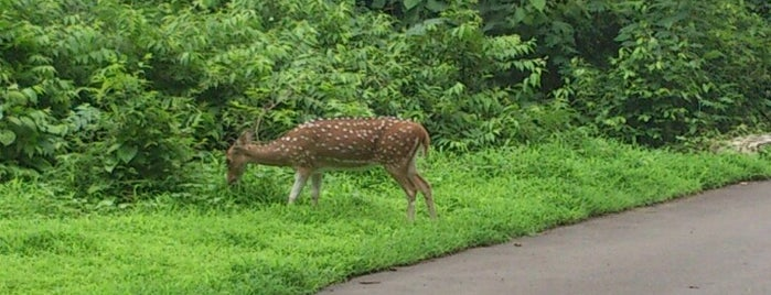 Sanjay Gandhi National Park is one of Mumbai Maximum.