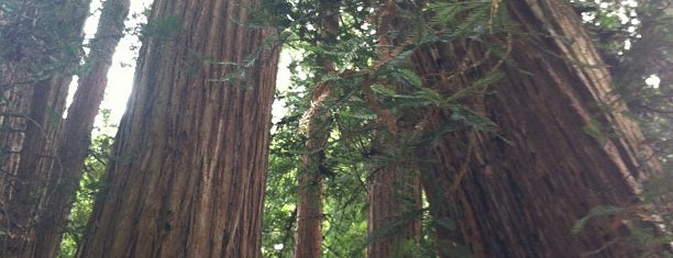 Muir Woods National Monument is one of SF.