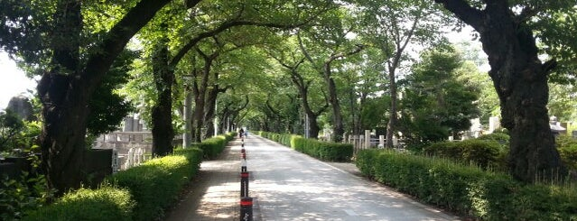 Aoyama Cemetery is one of GUYS IM GOING TO TOKYO.