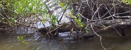 Bentota River is one of Trips / Sri Lanka.