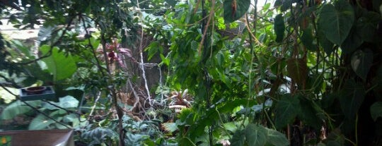 The Rainforest is one of Entertainment.