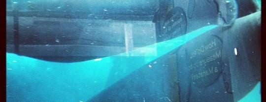 Mote Marine Laboratory & Aquarium is one of Sarasota #4sqCities.