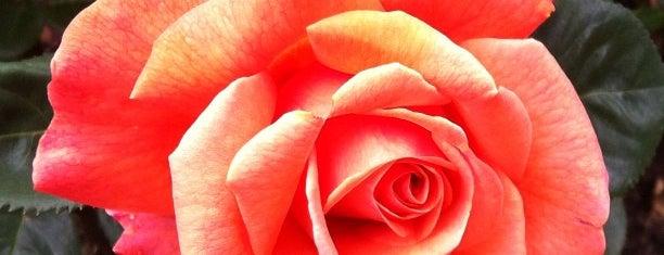 International Rose Test Garden is one of Best of Portland.
