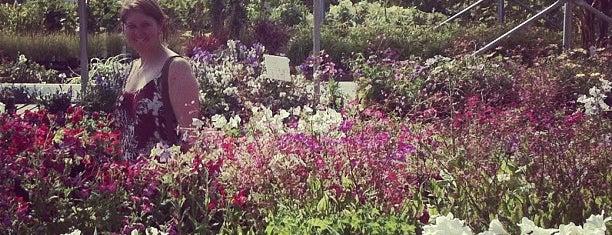 Ellerslie Gift & Garden is one of Greenhouses & Garden Centres.