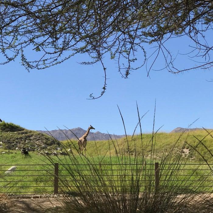 Photo of The Living Desert