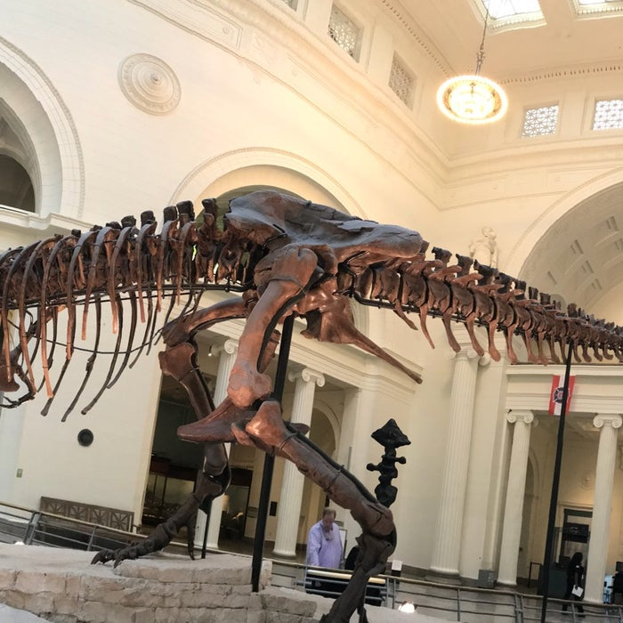Photo of Field Museum
