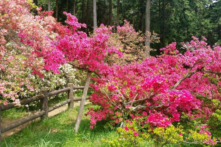 尊 公園 五大 つつじ 五大尊つつじ公園の今日・明日の天気 週末の天気・紫外線情報【お出かけスポット天気】