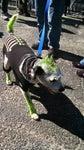 Green Dog Kennels