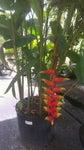 Amelia's Smarty Plants