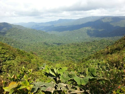 Treasures of Monteverde Cloud forest 2
