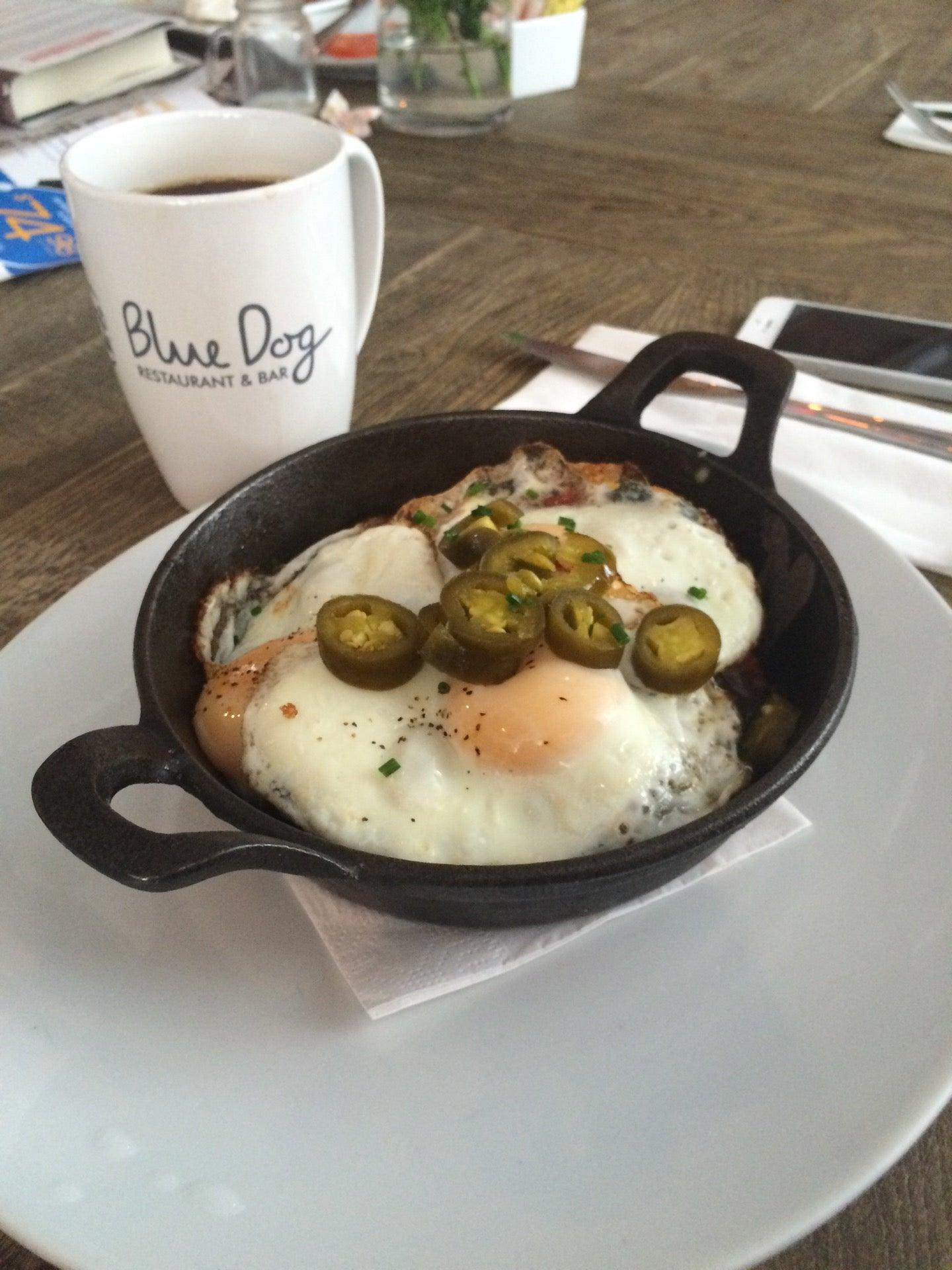 Blue Dog Kitchen Bar In New York Parent Reviews On Winnie
