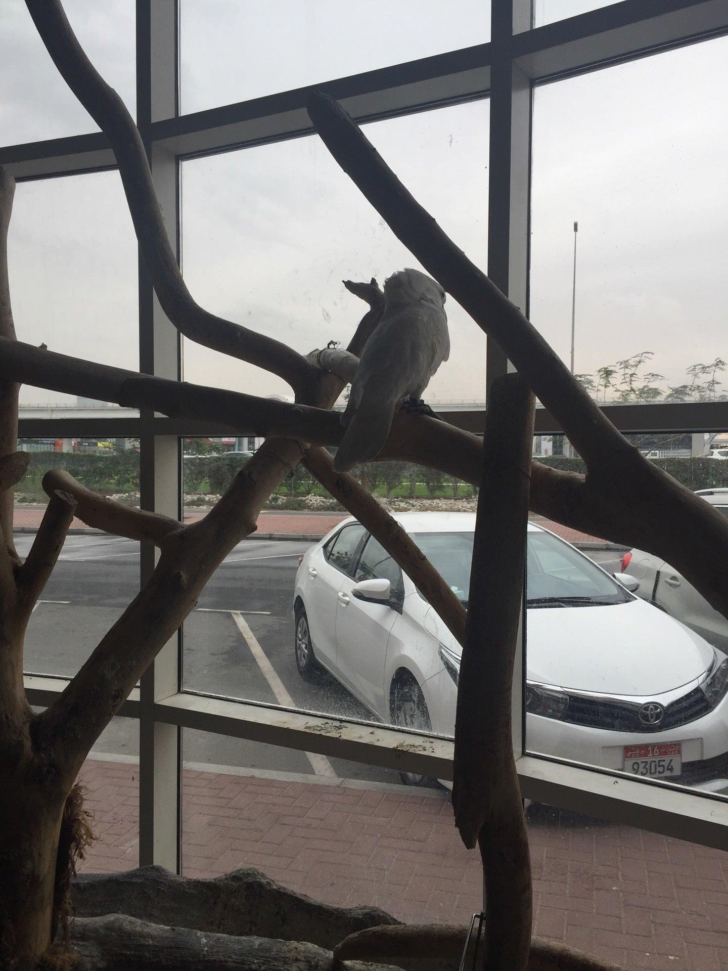 Pets Plus Mercato Mall 171 Jumeirah Road Dubai 2gis