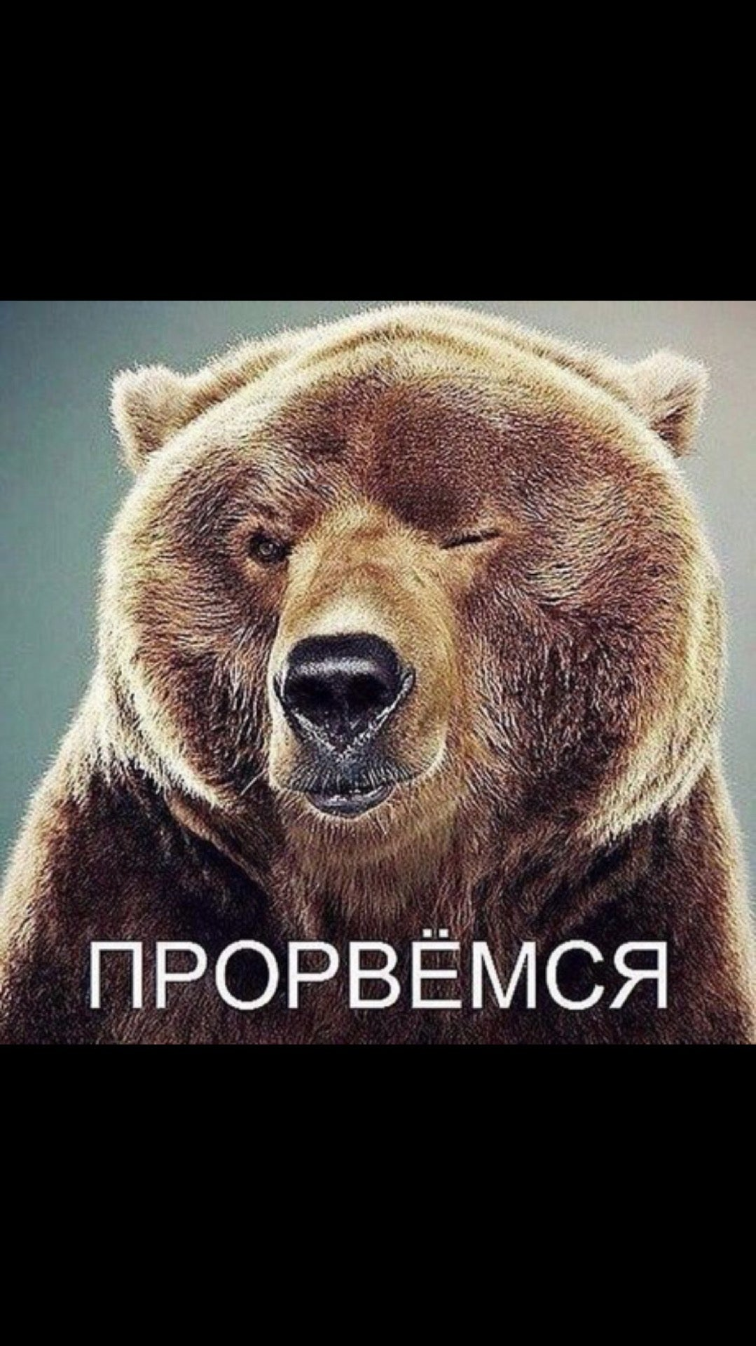 Прорвемся фото с медведем