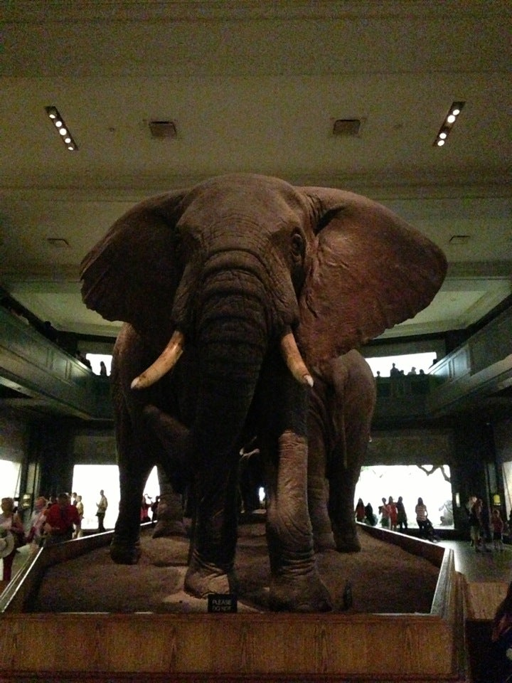 Hotels Near American Museum Of Natural History