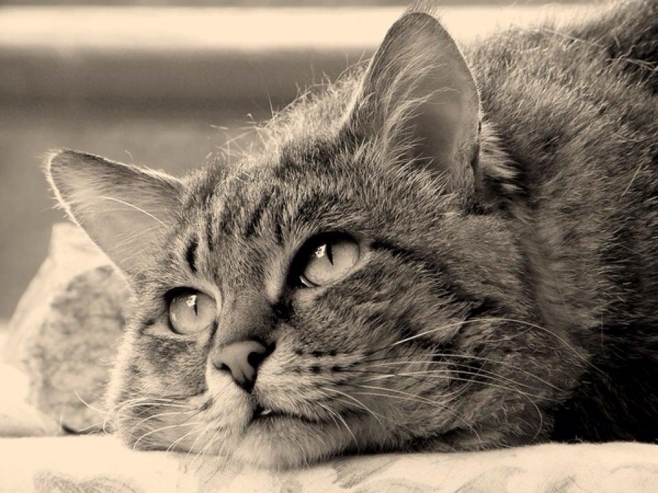 удивите картинки тоскующий кот этого зверек слизывает