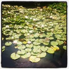ბოტანიკური ბაღი/The Botanical Gardens