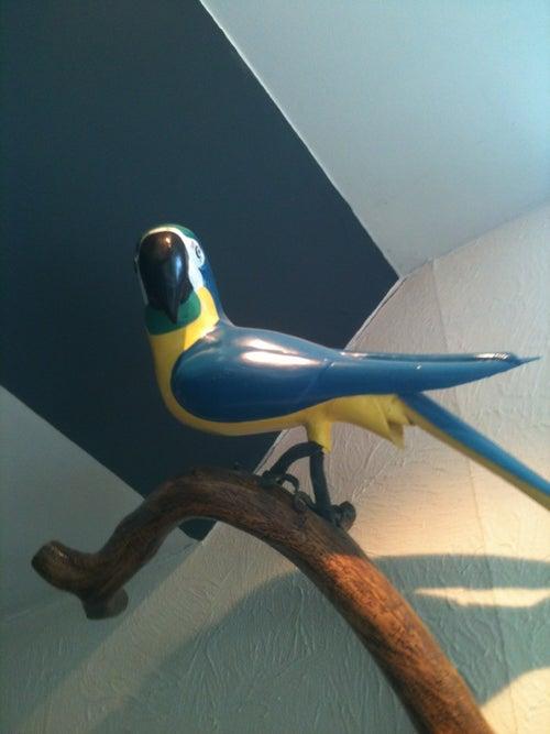 Papegøjehaven