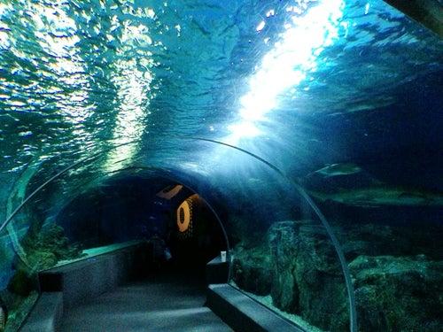 Siam Ocean World_24