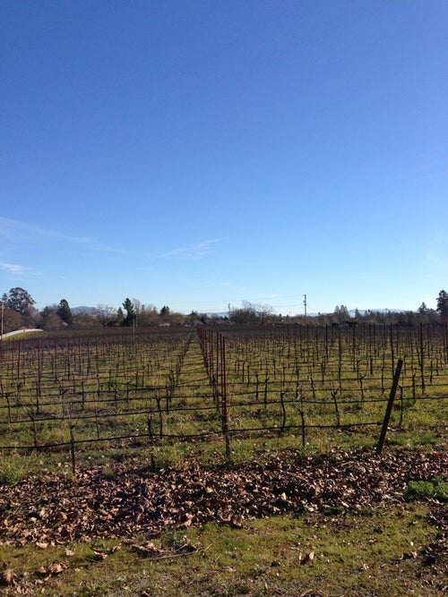DeLoach Vineyards_24
