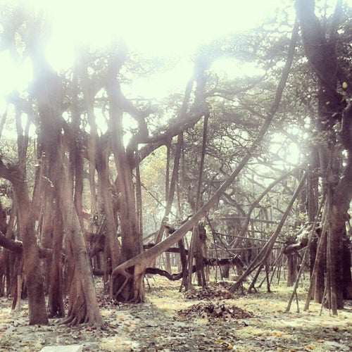Acharya Jagadish Chandra Bose Indian Botanic Garden_24