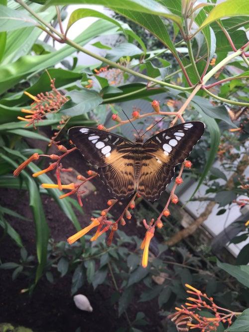 Butterfly Garden, Grevenmacher_16