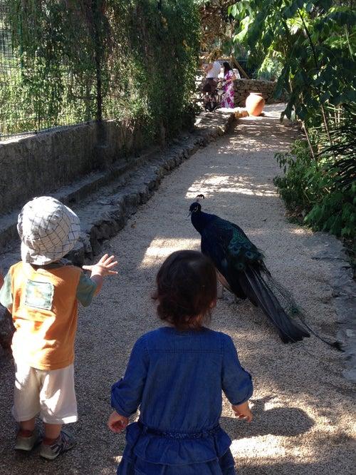 Zoa Parc Animalier Et Exotique Sanary Bandol Parc Et Zoo A Sanary