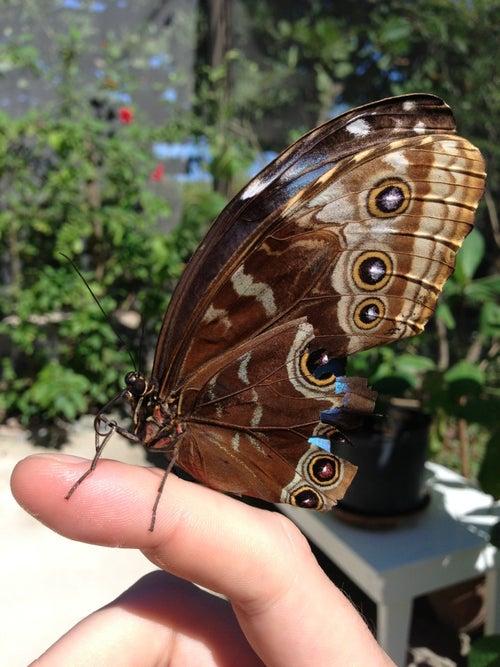 Butterfly Farm_22
