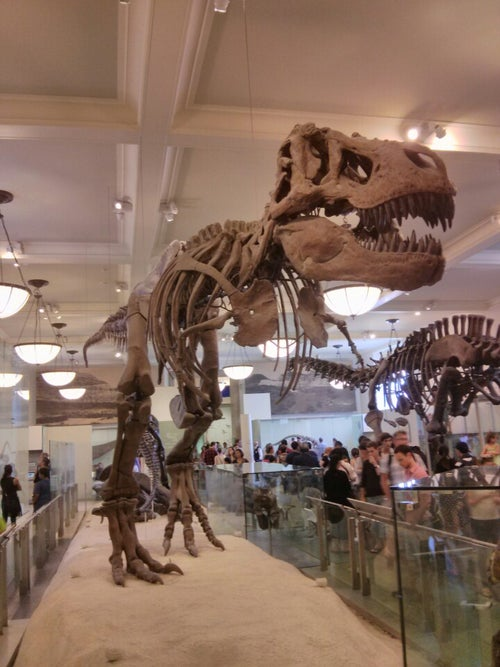 American Museum of Natural History_24