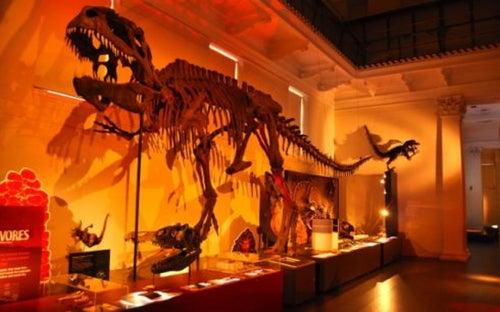 Australian Museum_24