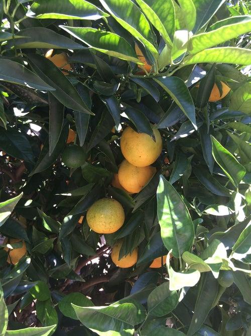 Image result for limone sul garda limonaia del castel images