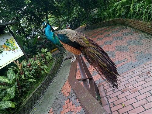 Kuala Lumpur Bird Park_24