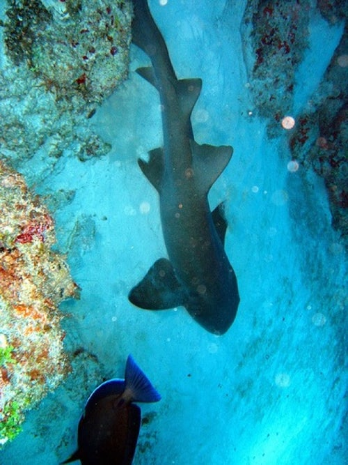 Cave of the Sleeping Sharks