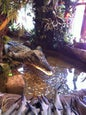 Rainforest Café_11
