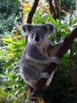 Currumbin Wildlife Sanctuary_6