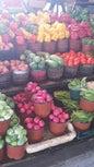 Dallas Farmers Market_2