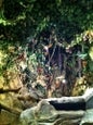 Rainforest Café_6