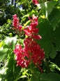 Flecker Botanic Gardens_1