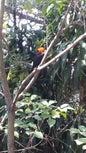 Parque zoológico_1