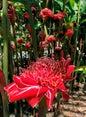 Flecker Botanic Gardens_8