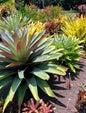 Flecker Botanic Gardens_7