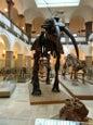 Paläontologisches Museum München_12