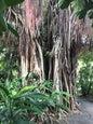 J.R. O'Neal Botanic Gardens_1